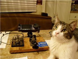 My Cat (Feline) Buddy, 'CQ' (yes, that is his name) with my Icom IC-7000 radio