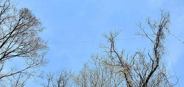 The 450-Ohm Ladder Line